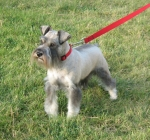 REPITITION'S RUEDESHEIM ECHO, CALL NAME: MARLEY